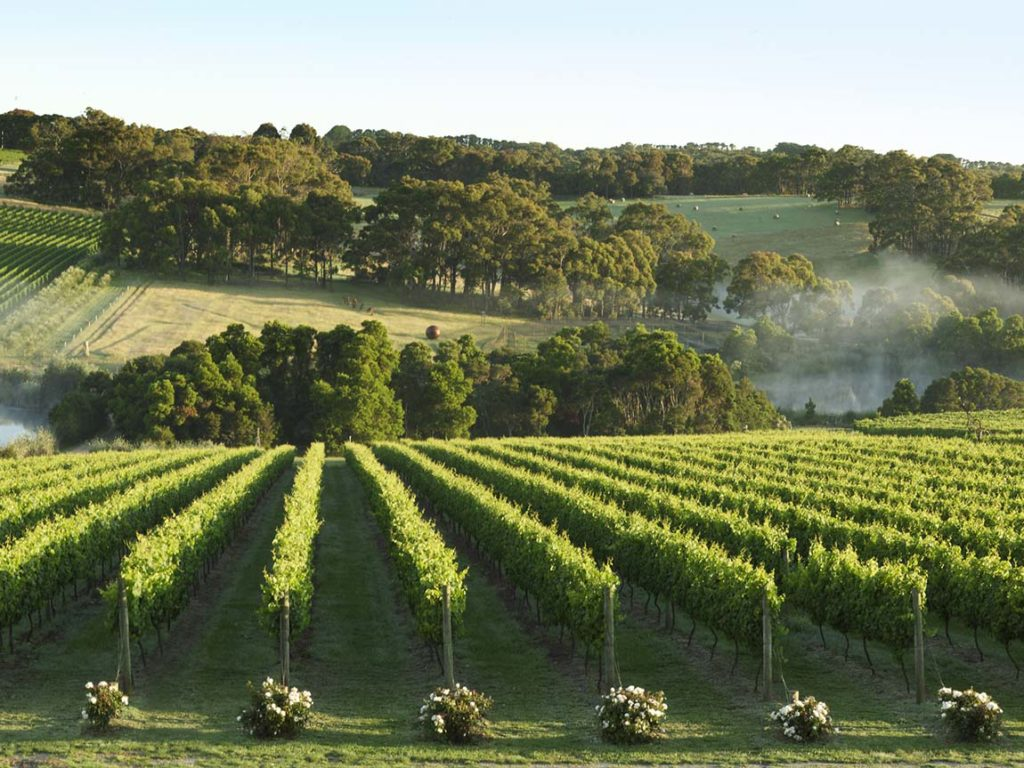Montalto vineyard Mornington Peninsula